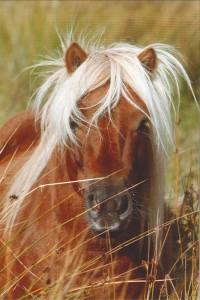Pony hoofdje