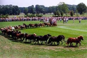 Op de Jubileummanifestatie in 1992 te Ermelo is een poging gedaan om in het Guinness Book of Records te komen. Een aanspanning met 40 Shetland pony's, bestuurd door wijlen Gerard ten Pas werd door de hoofdring gestuurd en de recordpoging slaagde.